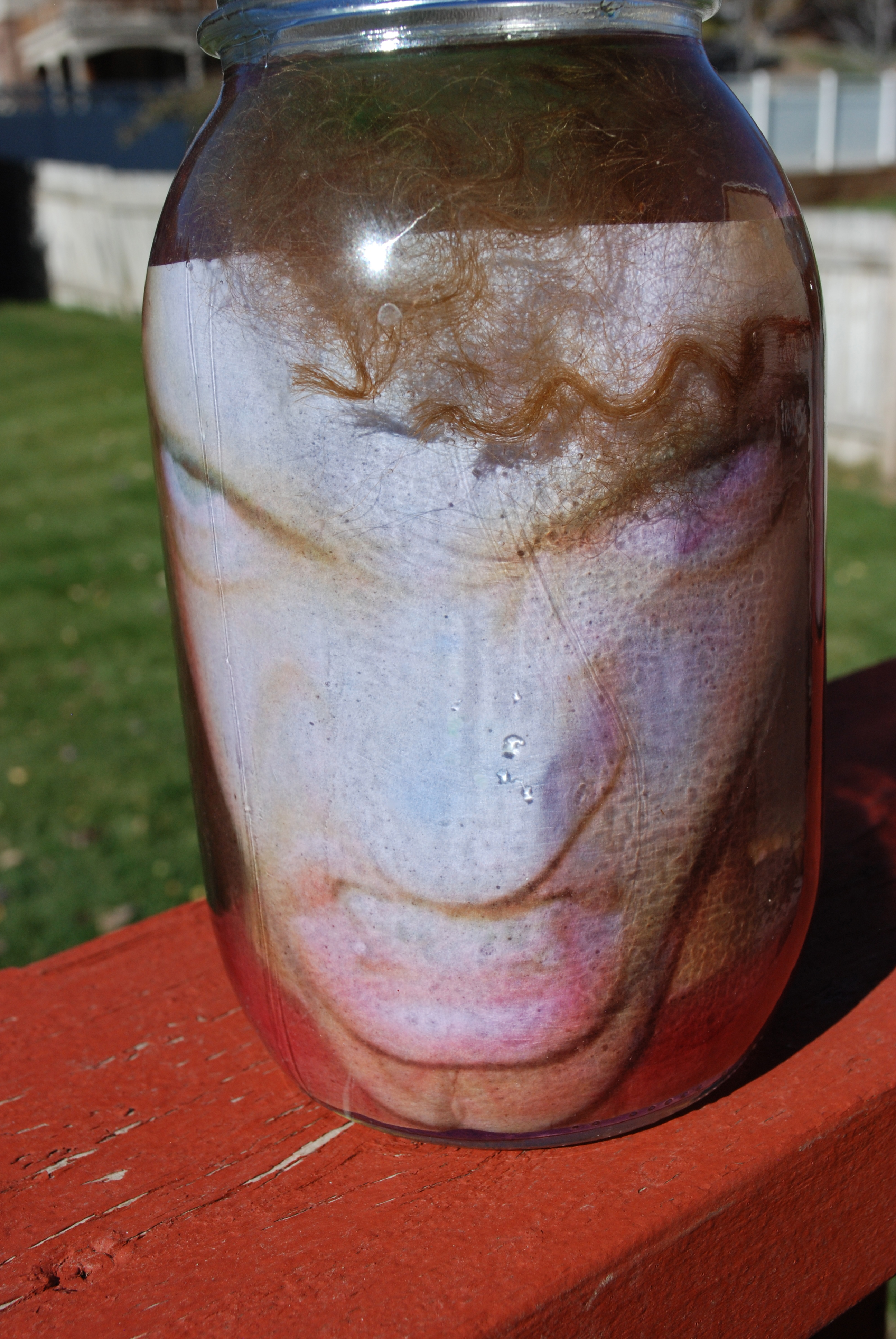 image regarding Head in a Jar Printable called Intellect within a Jar illusion