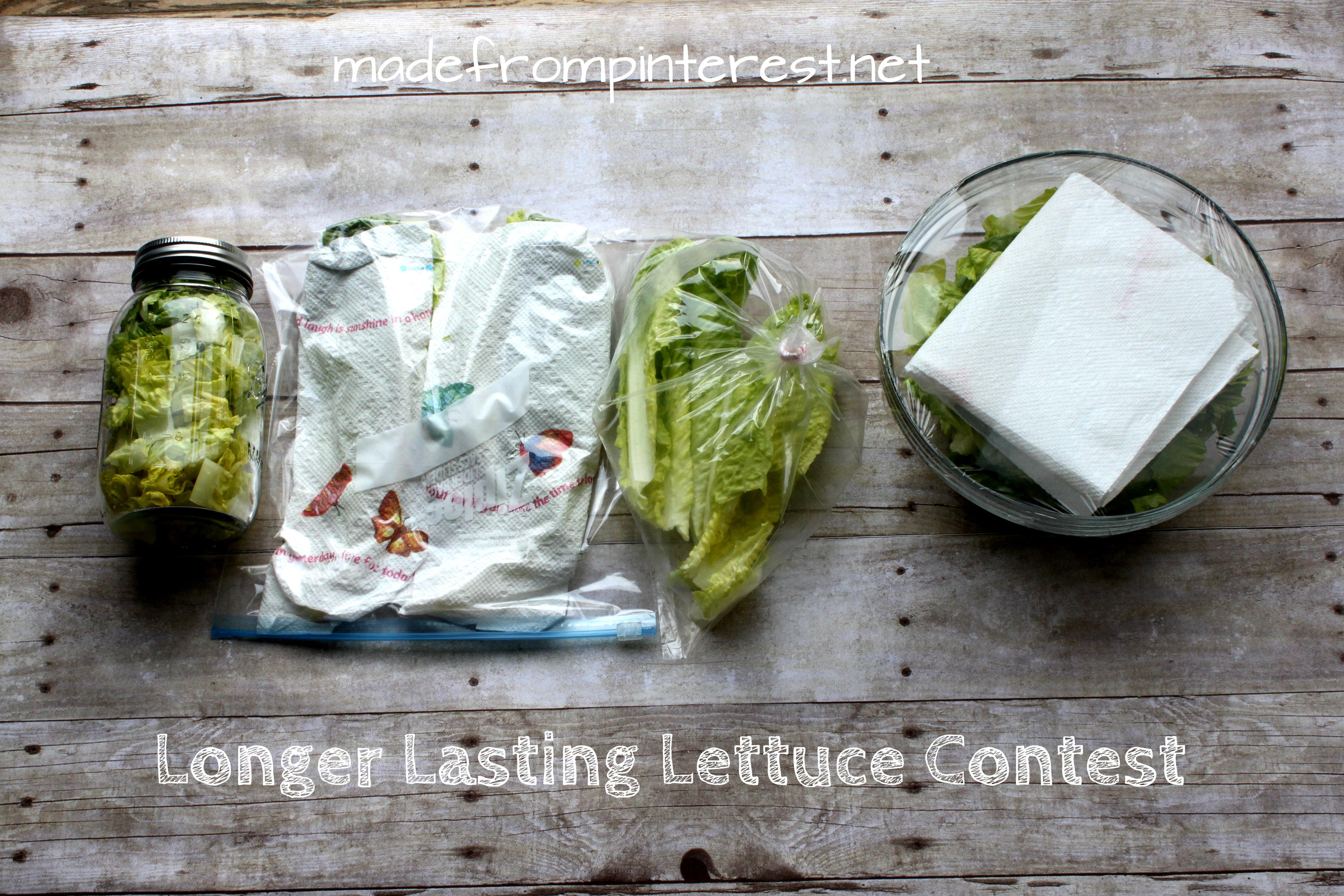 Longer Lasting Lettuce Contest by madefrompinterest.net