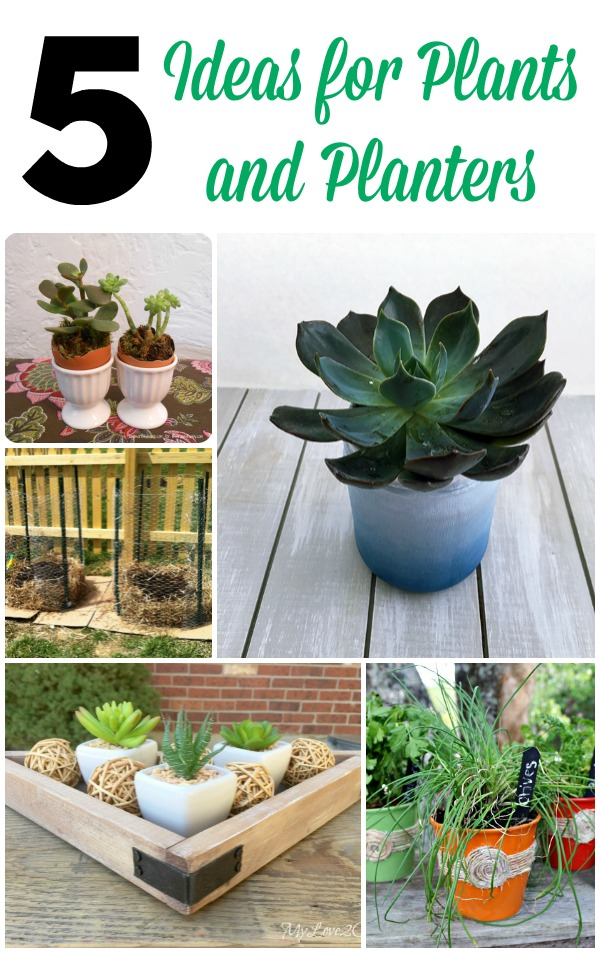5-Ideas-Plants-and-Planters