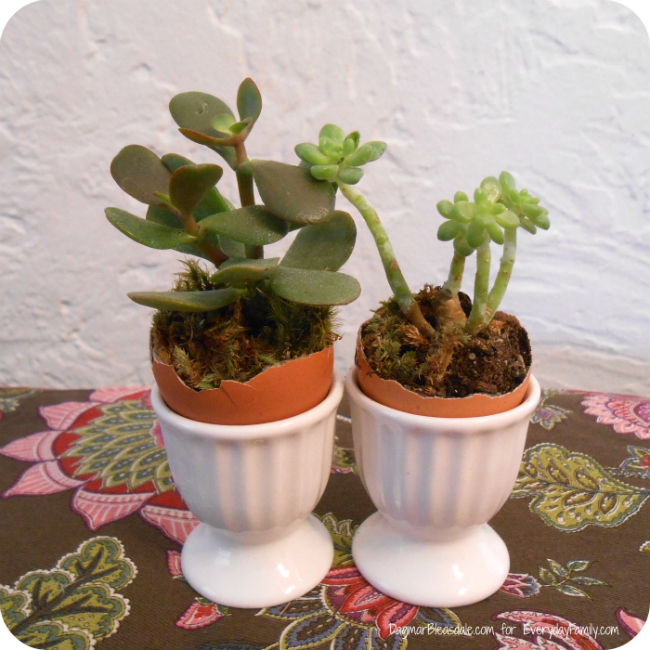 DIY-Easter-Succulent-Garden