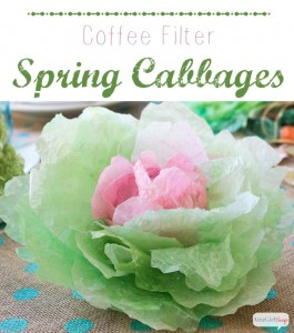 Coffee Filter Spring Cabbages