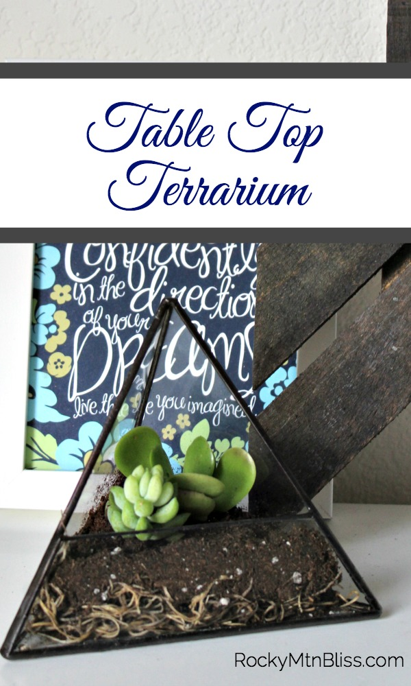 This quick terrarium tutorial demonstrates how easily you can make your own DIY succulent garden.