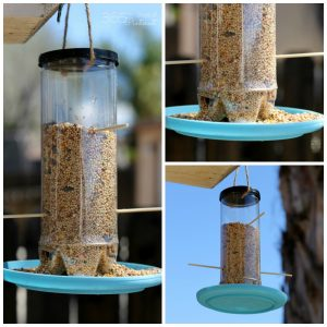 bird feeder FB collage
