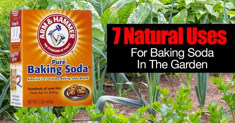 baking-soda-garden-01312016-768x403