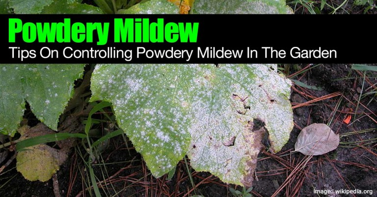 powdery-mildew-control