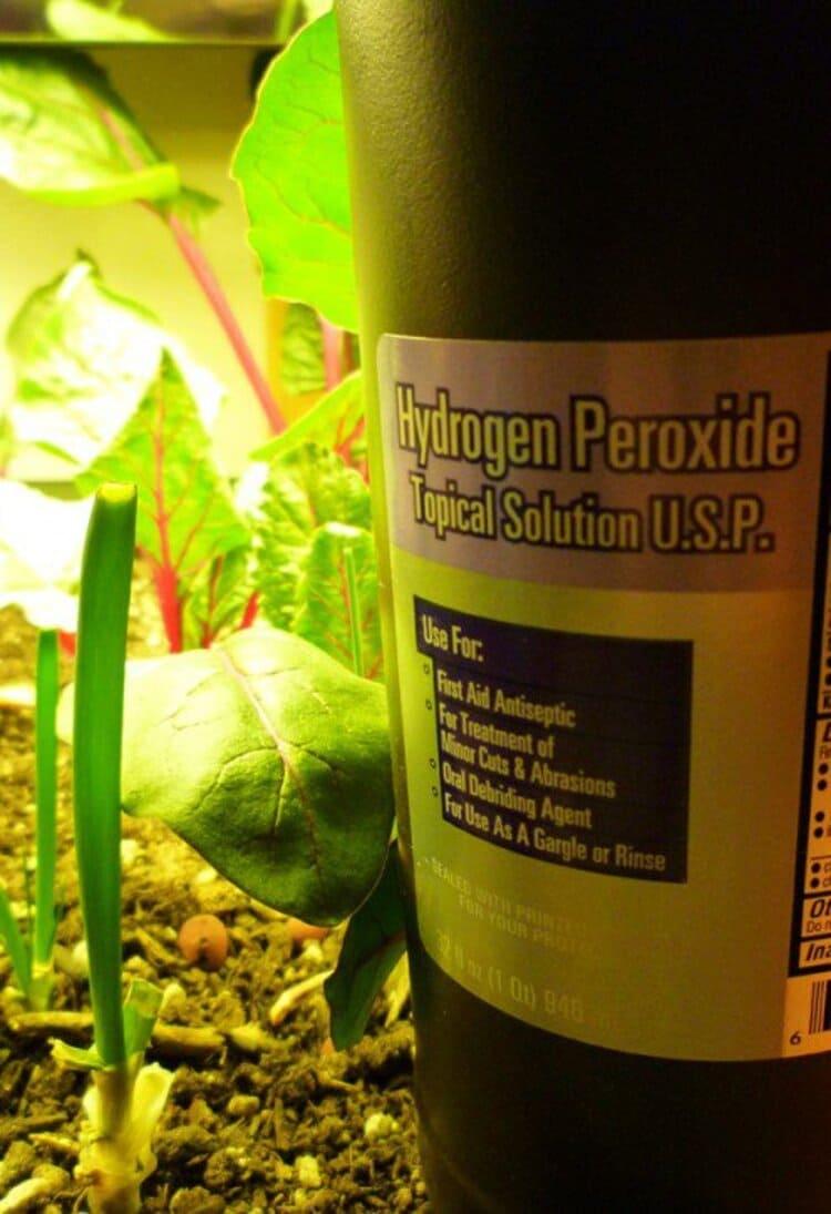hydrogen peroxide for plants, a bottle in the garden