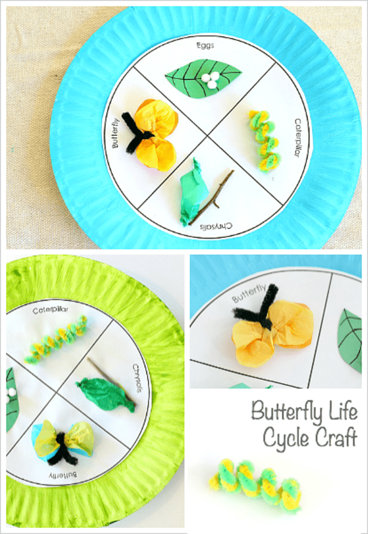 paper plate craft butterfly life cicle collage photo with eggs, caterpillar, butterfly